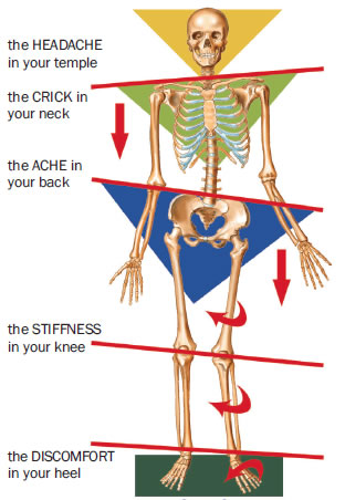 orthodics-skeleton